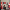 Gonca Yelda ORHAN: ÇİFTÇİ MAĞDUR!!